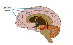 تاثیر نوشتن در قشز مخ